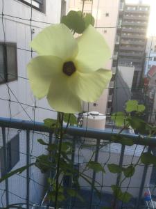 花を食べたのは誰ですか・・・?