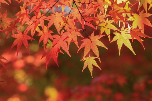 秋といえば、、、