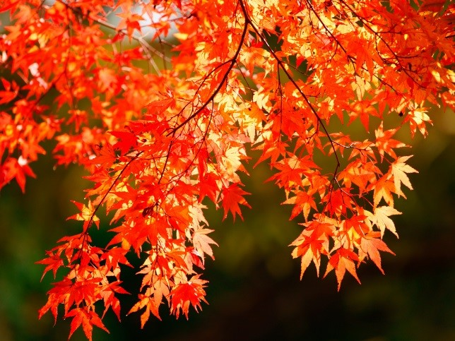 「〇〇の秋」
