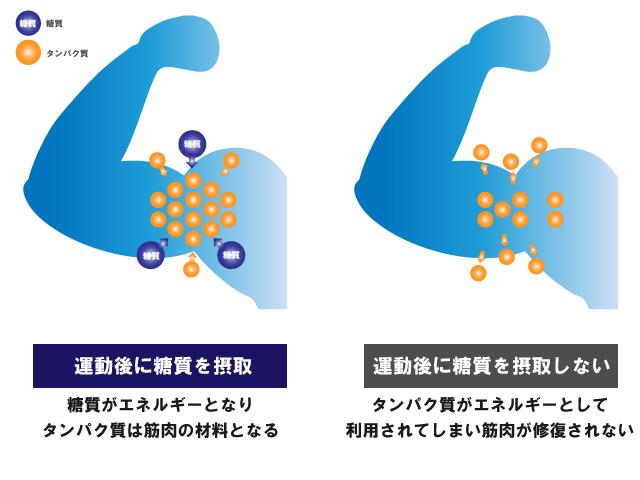 栄養とサプリメントの基礎知識【スタミナづくり編】