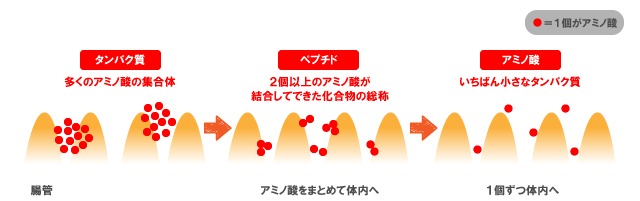 栄養とサプリメントの基礎知識【カラダづくり編】